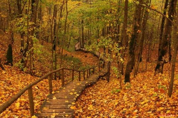 красивая осень фото