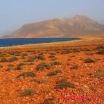 Удивительный уголок планеты остров Сокотра