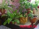 Растения - очистители воздуха
