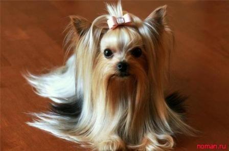 Модные декоративные собачки