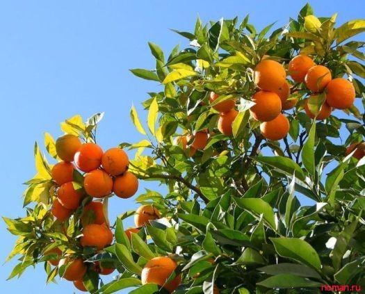 Как растут экзотические плоды и фрукты