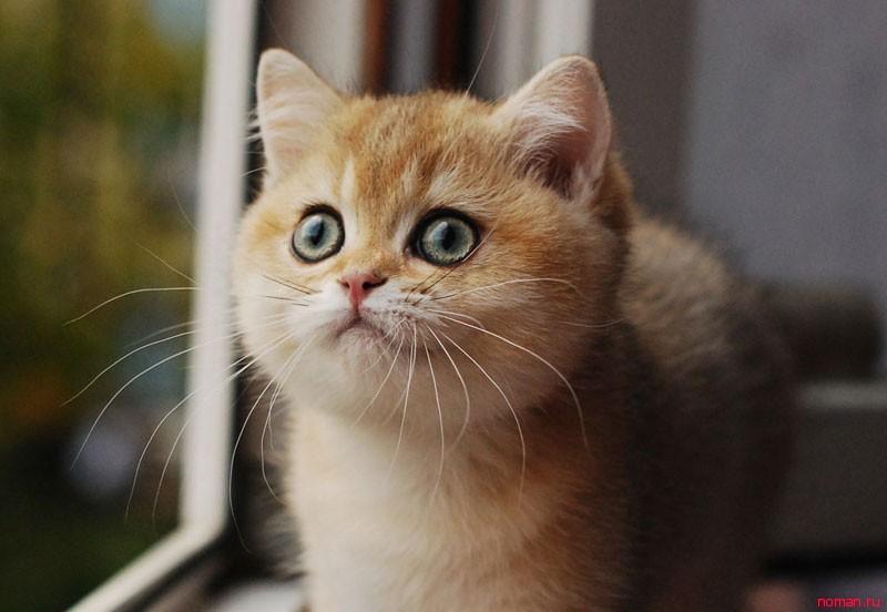 приучаем котенка к горшку