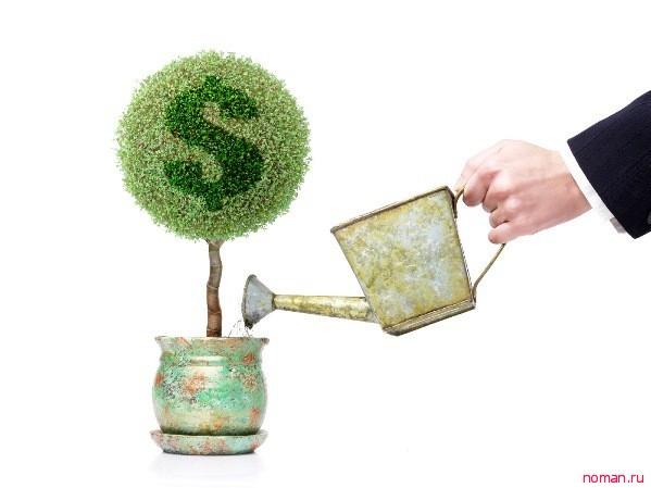 Комнатные растения финансового благополучия
