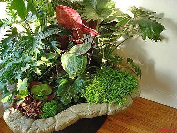 Комнатные растения в интерьере. Часть третья
