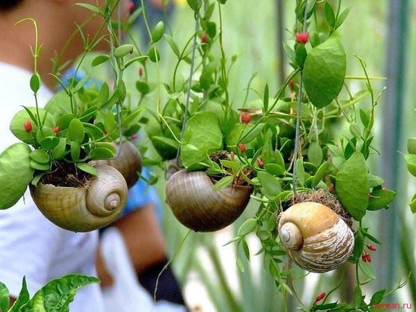 Как оформить и ухаживать за комнатными растениями в подвесных кашпо